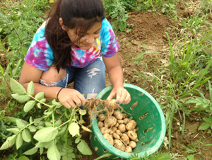 Diana Valencia from Westmoreland harvesting potatoes